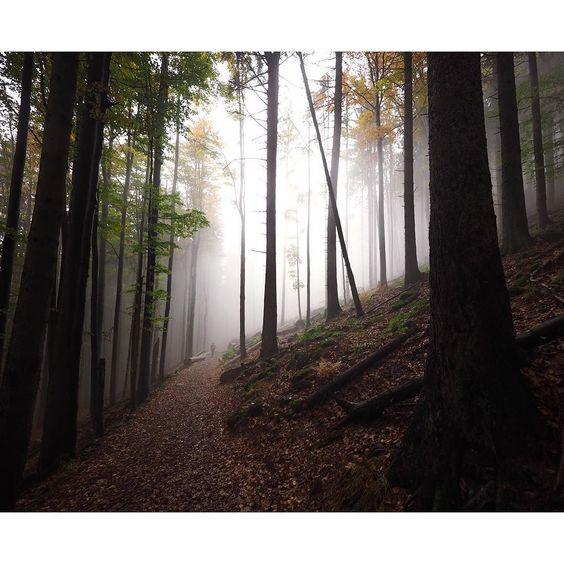 Walker In The Mist  #bastiank #olympus #olympusomd #falkenstein #großerfalkenstein #nature #nationalpark #bayerischerwald #bayern #bäume #bavaria #zwieselerwaldhaus #zwiesel #woods #wanderlust #weitwinkel by bastiank.fotografie