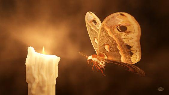 Afbeeldingsresultaat voor moth flame