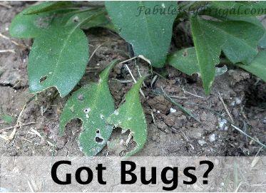 Diy Homemade Pesticide Gardens Amazon Deals And Homemade