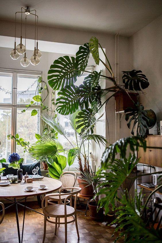 Tendance plante : la monstera s'invite à l'intérieur - Côté Maison