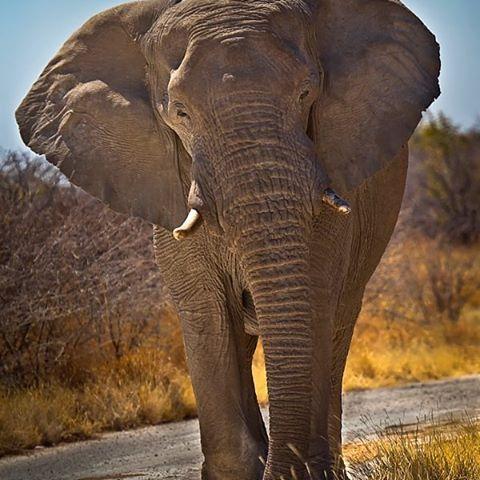 Wild Geography @wildgeography #wildgeography #HowLoved #animals #animalsofinstagram #loveanimals #cuteanimals #buzzfeedanimals #babyanimals #instaanimals #wildanimals #animalsco #iloveanimals #savetheanimals #funnyanimals #noanimalsharmed #SaveAnimals #veganfortheanimals #farmanimals #animalshelter #stuffedanimals #animalsaddict #animalslover #animalsmood #animalstyle #fortheanimals #adorableanimals #animalstagram #animalsofig #PartyAnimals #loveallanimals #instanimals