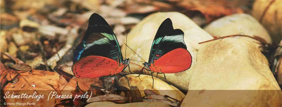 Biodiversität | Parque Nacional del Manu