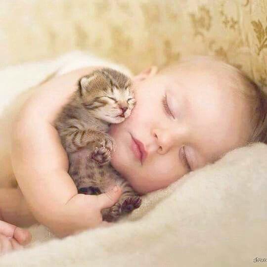 Snuggly Mummy Hugs Cute Animals Cute Baby Animals Cute Cats