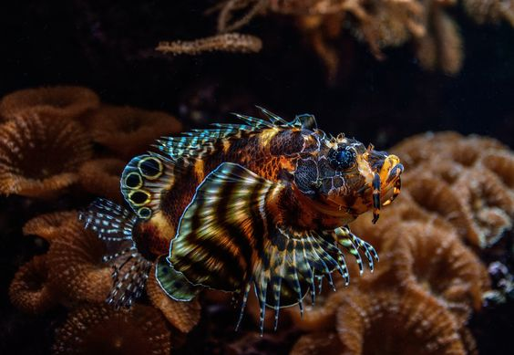 """Photo """"Feuerfisch"""" by Michael Rehbein on 500px"""