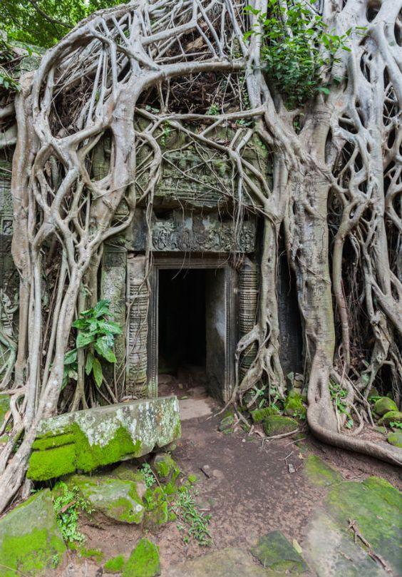 Ngôi đền Ta Prohm được xây dựng từ năm 1186