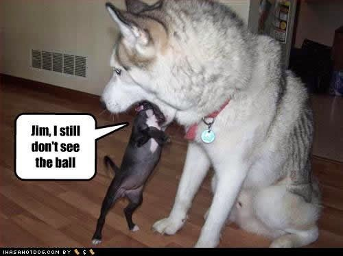 Rules Of The Jungle Funny Dogs With Sayings Funny Pinterest - Dogs looking funny with toys