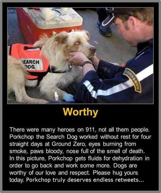 Not All of the Heroes of 9/11 Were Human  They are more human then most humans. Will help with no judgement or reward. Dogs are amazing creatures.
