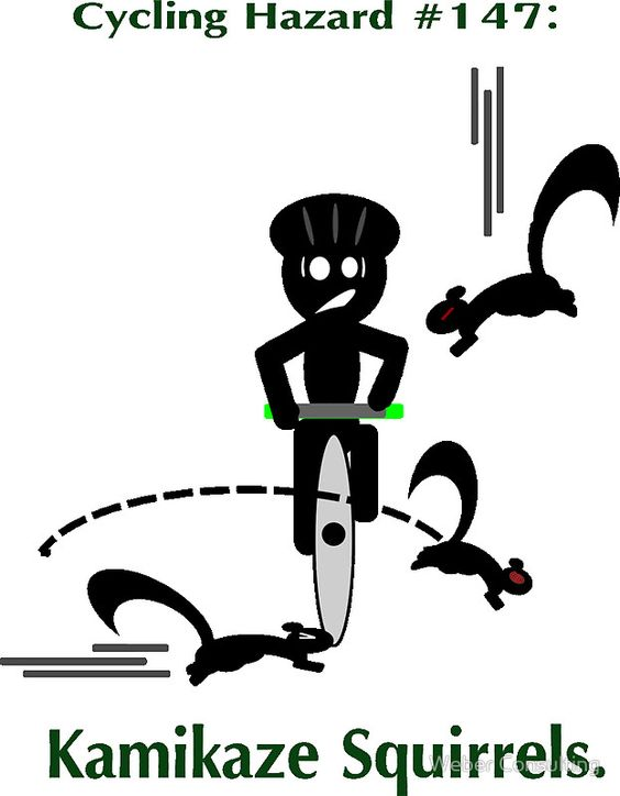 Cycling Hazards - Kamikaze Squirrels by Weber Consulting