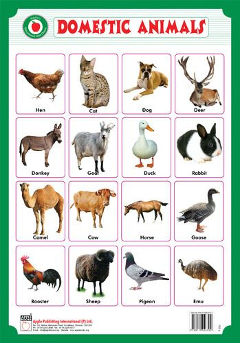 Domestic animals pictures with hindi names - photo#2