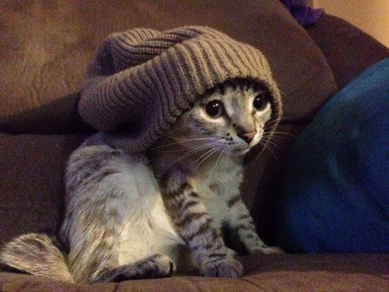 I_Have_A_Warm_Cat_Hat.jpg (600×450)