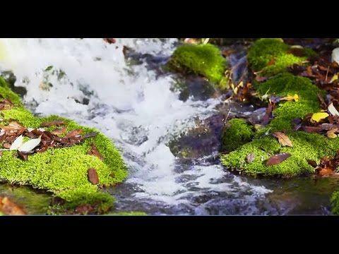 مناظر طبيعية مناظر طبيعية خلابة متحركة Hd Youtube Life Is Beautiful Nature Zen Garden