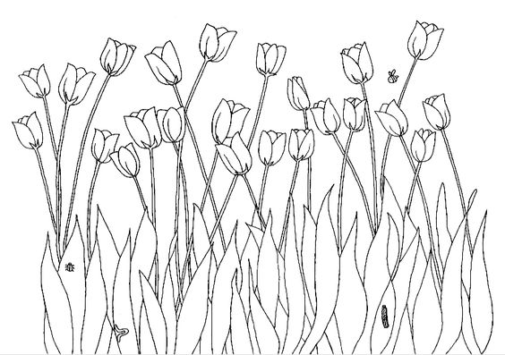 Spring Coloring Pages Tulip And Coloring Pages On Pinterest