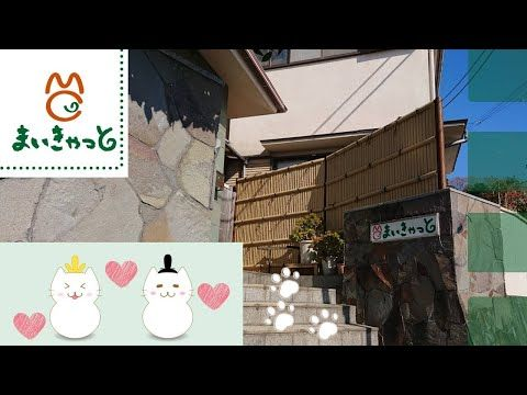In Yugawara Kanagawa Prefecture In Japan My Cat Yugawara Is A Ryokan That S Enticing Its Visitors With A Cuddly Proposition Pet Ow Pet Ownership Pets Cuddly