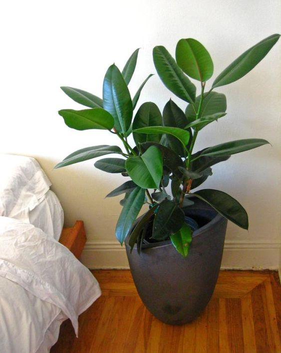 Pinterest the world s catalogue of ideas for Best air purifying plants for bedroom