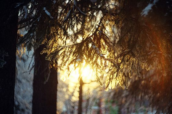 by alla nestulova on Flickr.