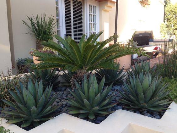 Newport Beach Modern Planter Blue Glow Agave Sago Palm