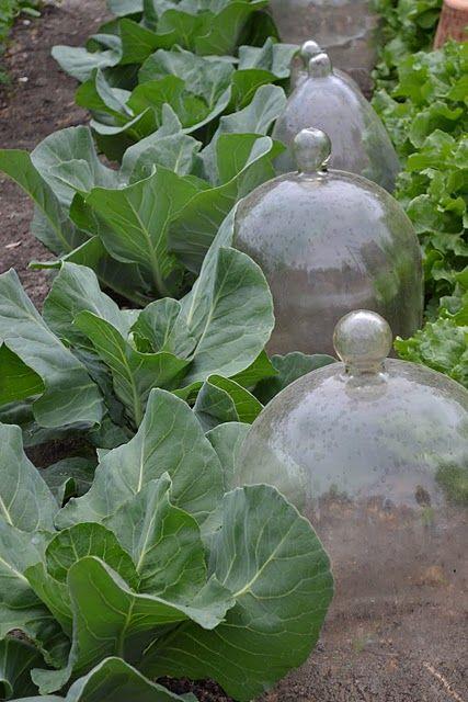 Glass bell cloches great gardens ideas shoot 39 s for Garden cloche designs