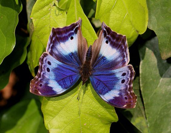 Butterfly from Africa
