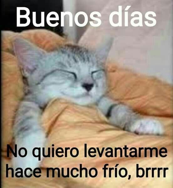 Pin De Irene Vazquez En Mensajitos O Saluditos Meme Gato Buenos Dias Dormilon Memes De Frio