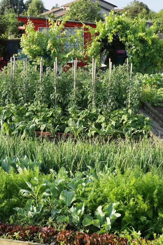 Inspiration: Kitchen vegetable garden | jardin potager | bauerngarten