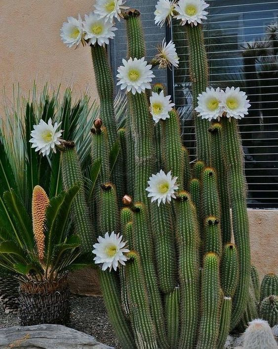 30 Creative Ideas Of Cactus Plants Decorations For Your Home Interior #plantdecor #gardendesign #gardeningtips