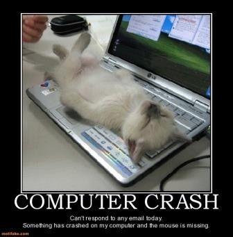 Cute Kitten Computer Crash