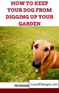 House Training A Older Dog Tips And Pics Of Tips For Potty