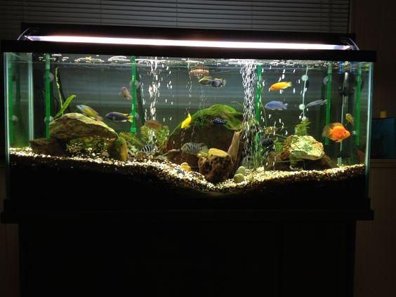 ... aquariums and more live plants cichlids aquarium plants cichlid