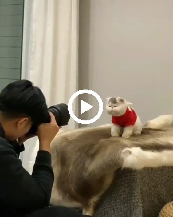 fotografano o gatinho