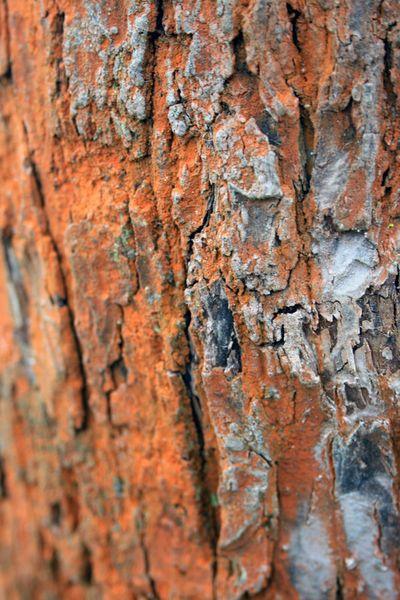 Naturkunst ,,, von Heidrun Lutz bei artflakes.com als Poster oder Kunstdruck $18.03