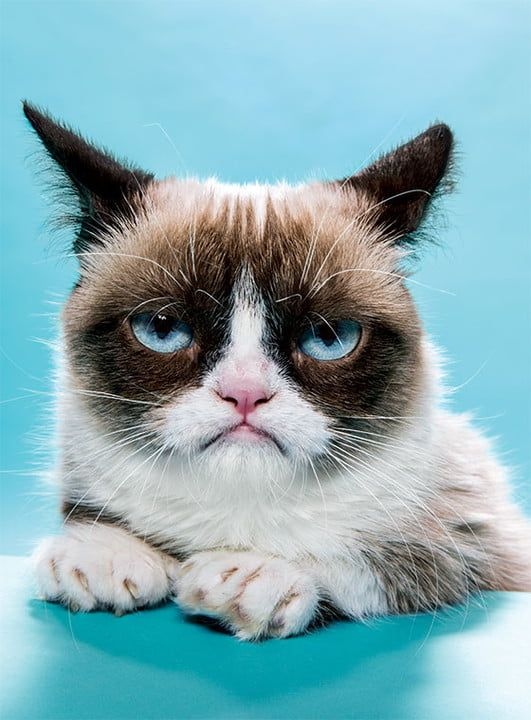 A Fond Farewell to Grumpy Cat, the Internet's Most Famous Feline | Digital Trends