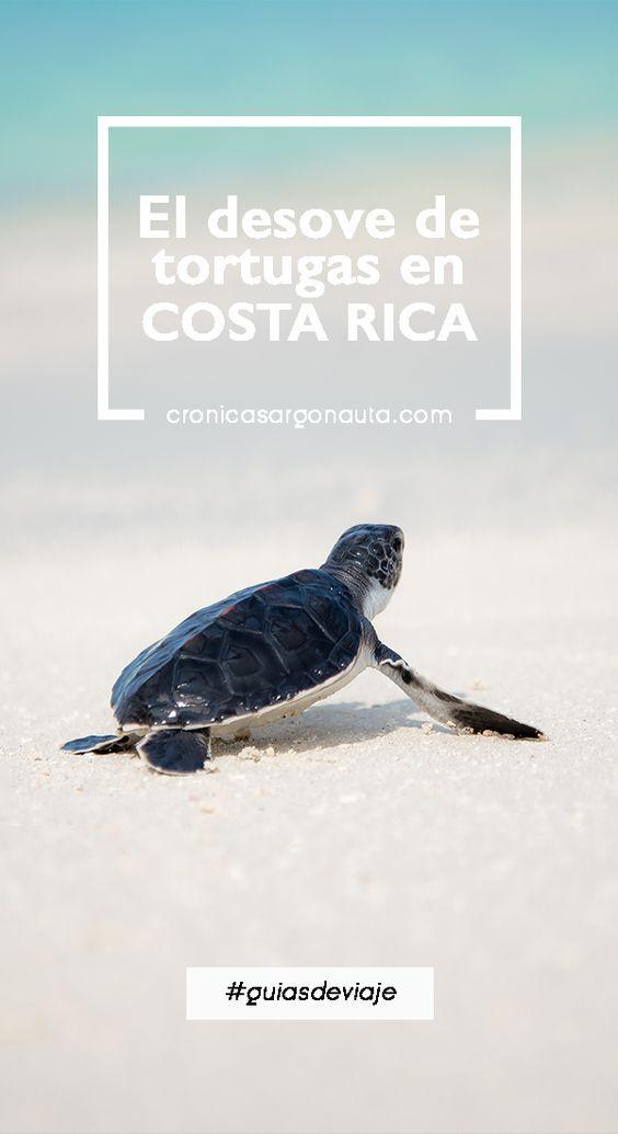 Dónde y cómo ver el desove de tortugas verdes en Costa Rica. ¡Toda la información!