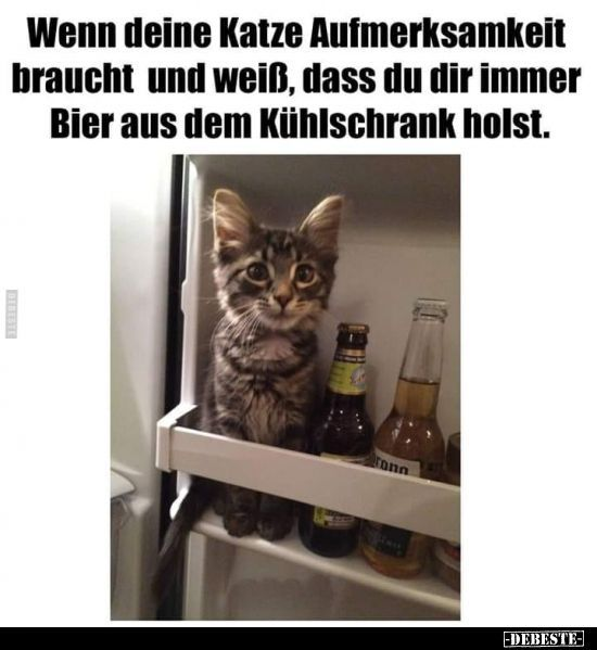 If Your Cat Needs Attention And Knows That You Mit Bildern