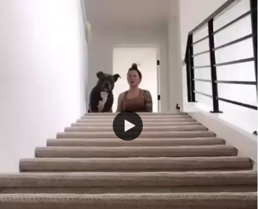 Cachorro desce de um jeito muito engraçado.