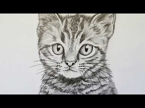 281 Katze Zeichnen Lernen Fur Anfanger Tiere Zeichnen Youtube Animal Drawings Drawing For Beginners Drawings