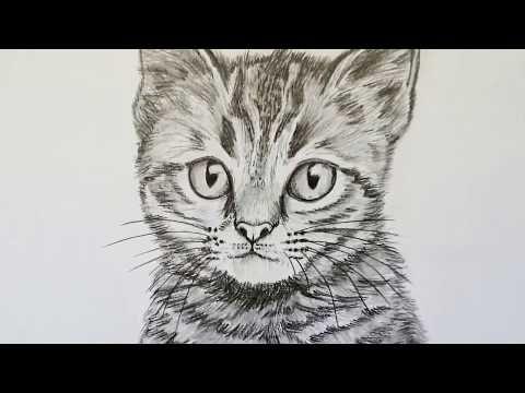 Katze Zeichnen Lernen Fur Anfanger Tiere Zeichnen Youtube