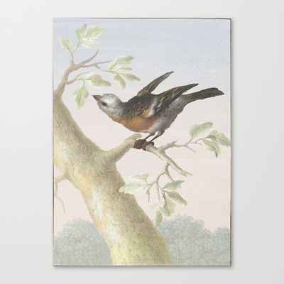 Curiouser and curiouser Stretched Canvas by anipani - $85.00  #art #bird