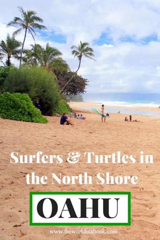 Surfers and Turtles are just some of the interesting things to see while in a day trip to the North Shore Oahu with kids | Hawaii with kids