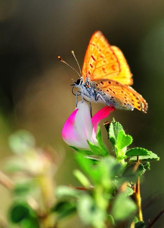 Butterfly by Mustafa Öztürk
