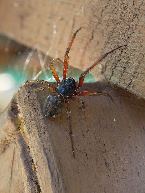 Araignee Du Soir Espoir Flickr Photo Sharing Spider Animals Pool
