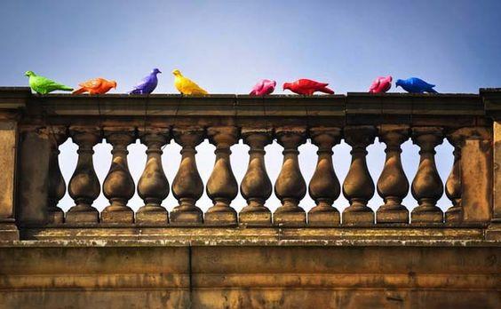 pigeon-multicolore-liverpool-art-3