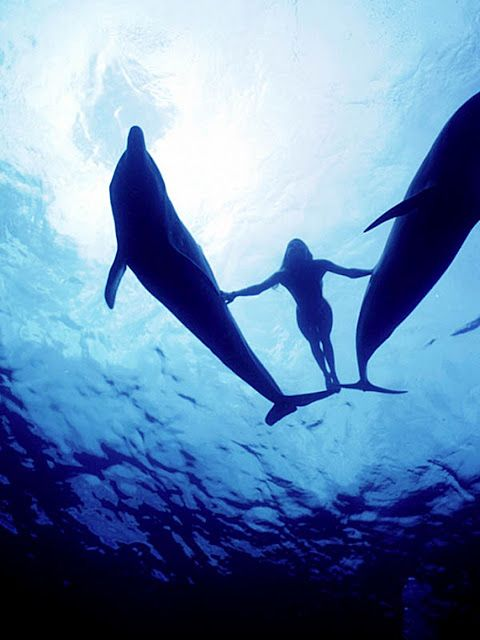 I have to swim with dolphins before I die. It's a must.