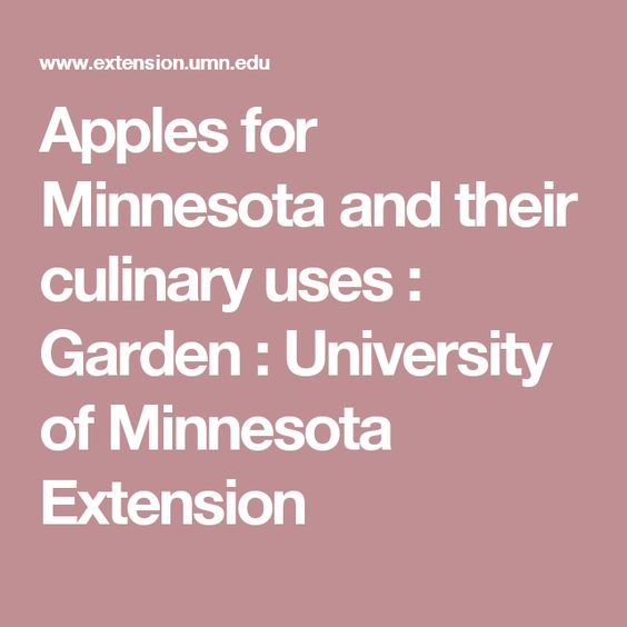 Apples for Minnesota and their culinary uses : Garden : University of Minnesota Extension