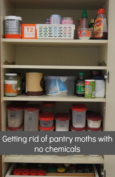 Reorganising The Pantry And Getting Rid Of Pantry Moths