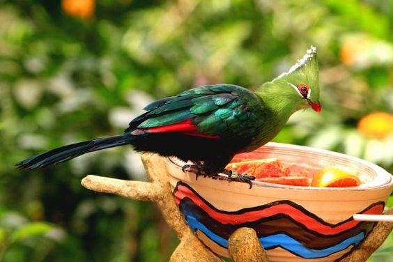 Một chuyến tham quan tại khu bảo tồn chim tuyệt vời này chắc chắn sẽ khiến bạn bị mê hoặc ngay tức khắc.