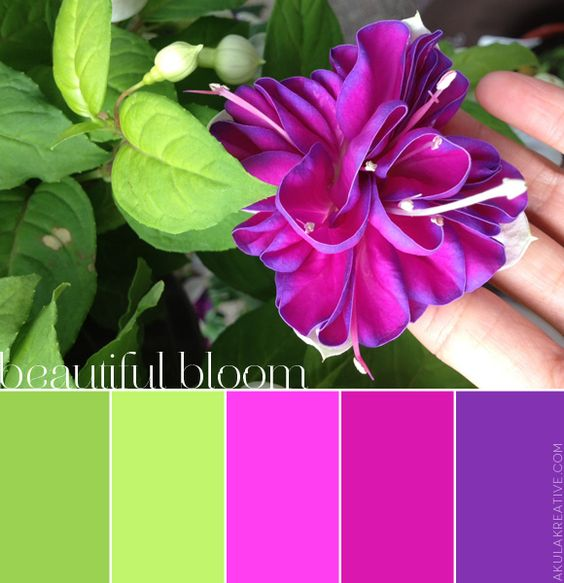 Pink purple and green hanging fuchsia color palette - Color schemes with lime green ...