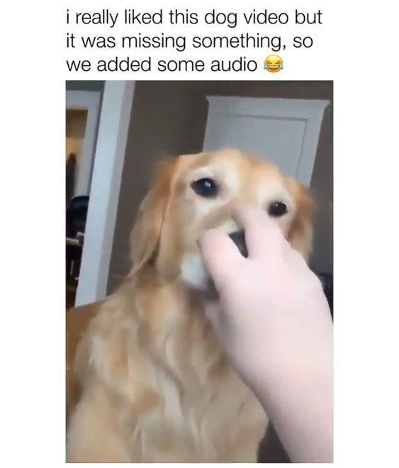 Best Funny Dogs Meme 2020 Animal Meme 130 Funny Image Page 7 Of 13 Soocoool Funny Animal Videos Funny Animals Cute Animals