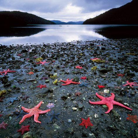 Starfish Colony. West Coast of New Zealand