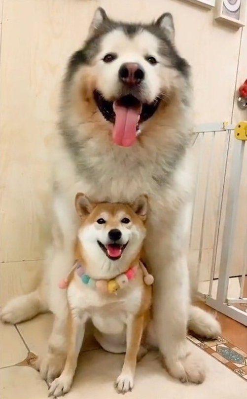 一年で立場逆転した犬がすごい Netgeek 動物 かわいい おかしな動物 可愛いワンちゃん