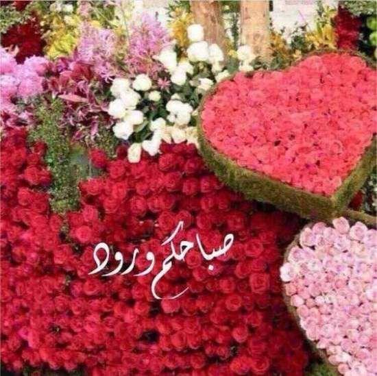 صور صباح الخير واجمل عبارات صباحية للأحبه والأصدقاء موقع مصري Beautiful Morning Messages Good Morning Beautiful Images Good Morning Arabic
